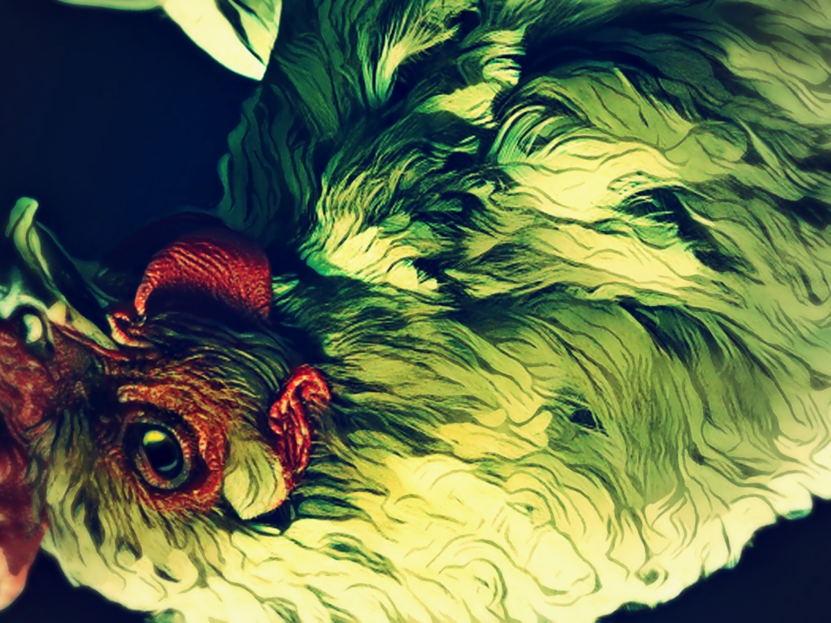 """""""Pain Is Pain,"""" original digital illustration in a graphic novel-influenced style of chicken upside down, in pain."""